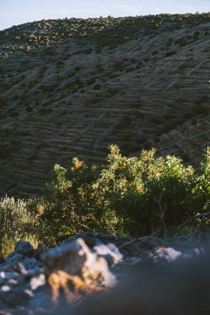 Hvar dry stone walls heritage